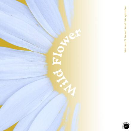 Wild Flower - Richard Dobeson